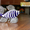 Рыбка из синего стекла. 20 рублей. Состояние отличное. #1565846