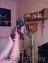 продам щенков стаффа - Изображение #3, Объявление #1098480