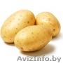 Картофель в розницу 4 900/кг