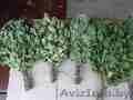 веники банные березовые и дубовые