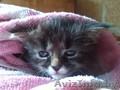 Милый котенок в хорошие руки